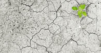 CO2 emissions in calcareous soil under various manure additions and water availability levels