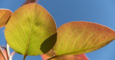 Effect of foliar fertilization in Coscia Pear seedlings on vegetative growth and biochemical characteristics
